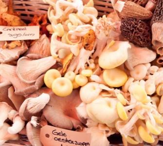 Graskip met paddenstoelen en bockbier