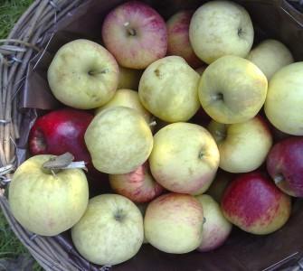 Makkelijke appel vierkantjes uit de oven