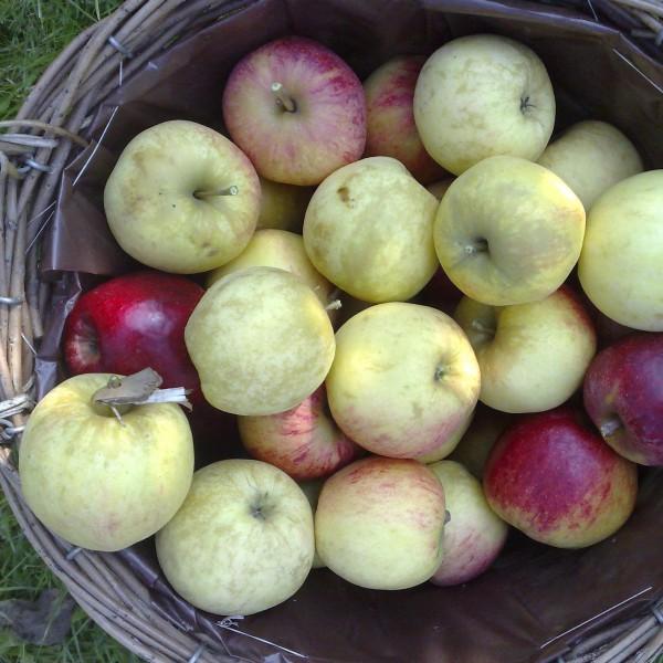 makkelijk gezond recept kinderen appelvierkantjes