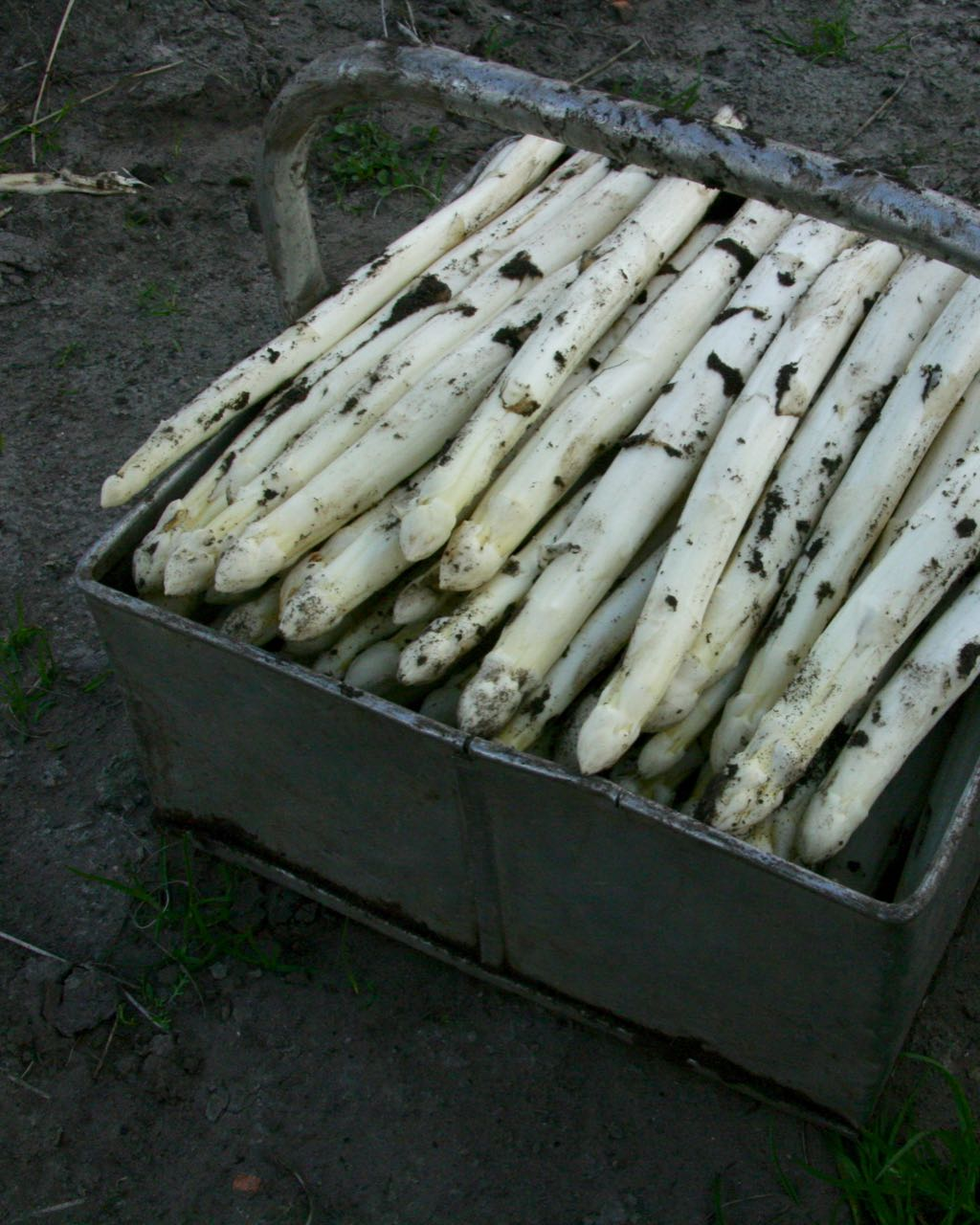 asperges van de boer groningen drenthe